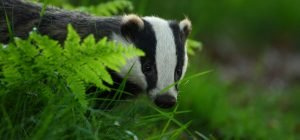 See the Badgers